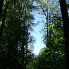 Ein Bachweg bei Hazelton