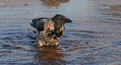 Ein Bad in der Ostsee...