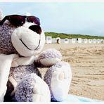Ein Bär auf Reisen #1