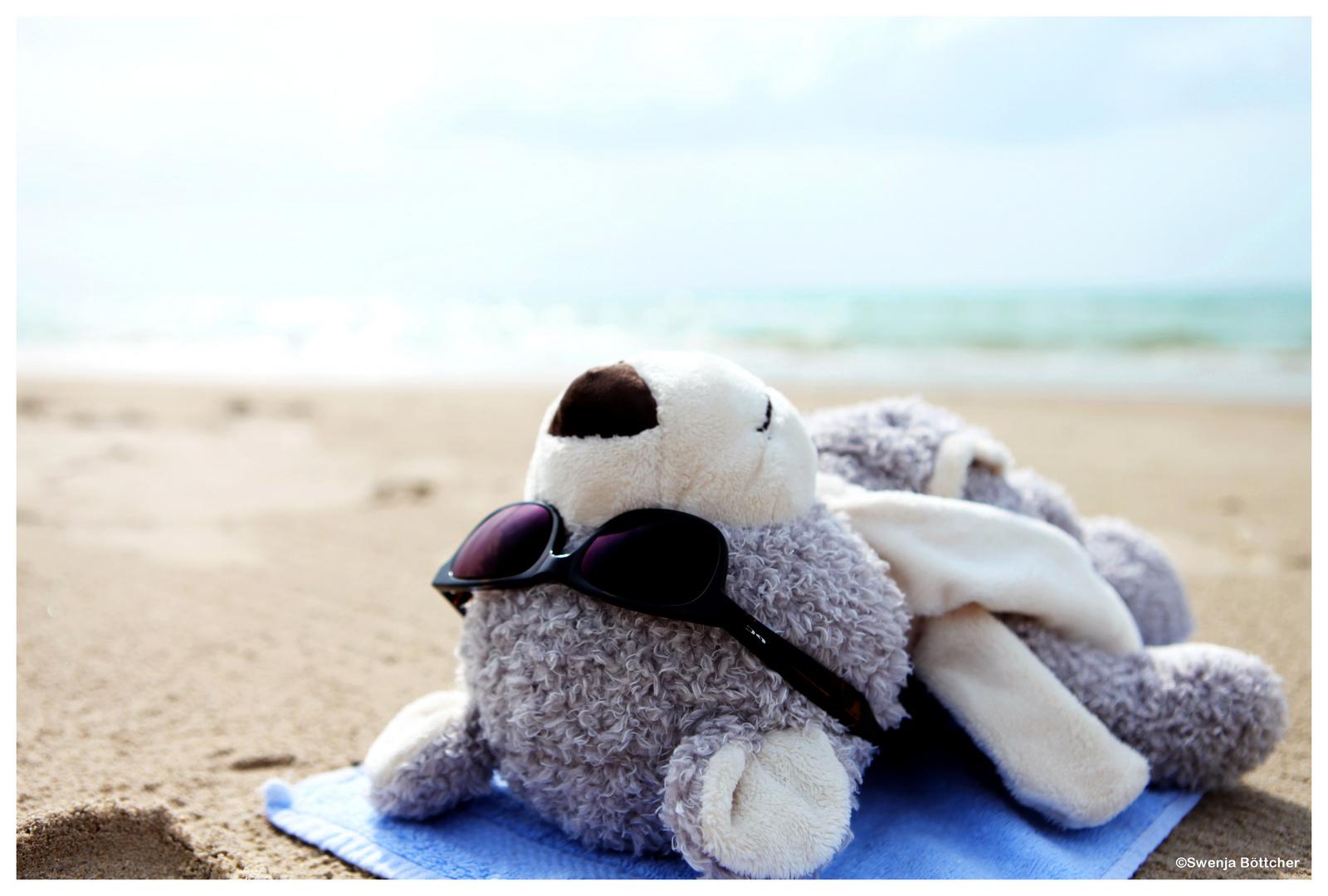 Ein Bär auf Reisen #2