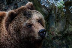Ein Bär namens Wanja.....