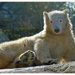 ein Bärenkind