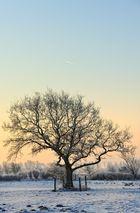 Ein Baum...