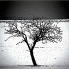 - Ein Baum -