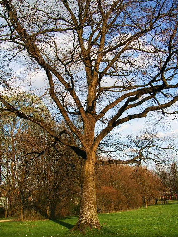 Ein Baum..