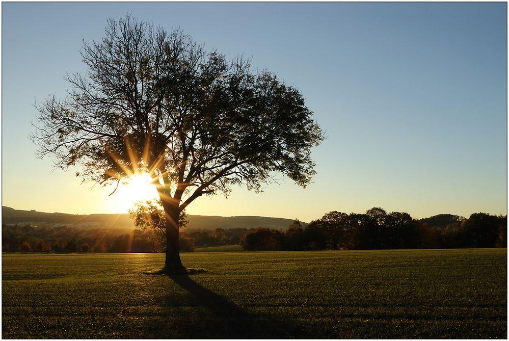 Ein Baum am Abend...