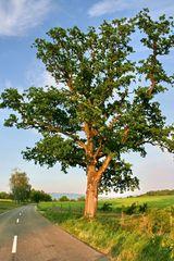 Ein Baum am Rande