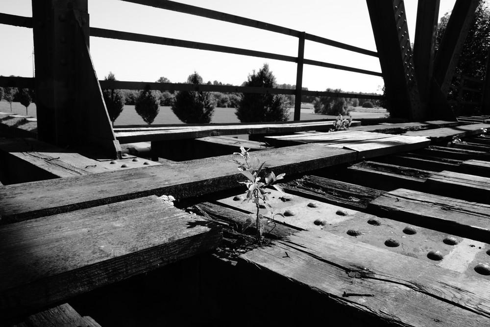 Ein Baum auf der Brücke
