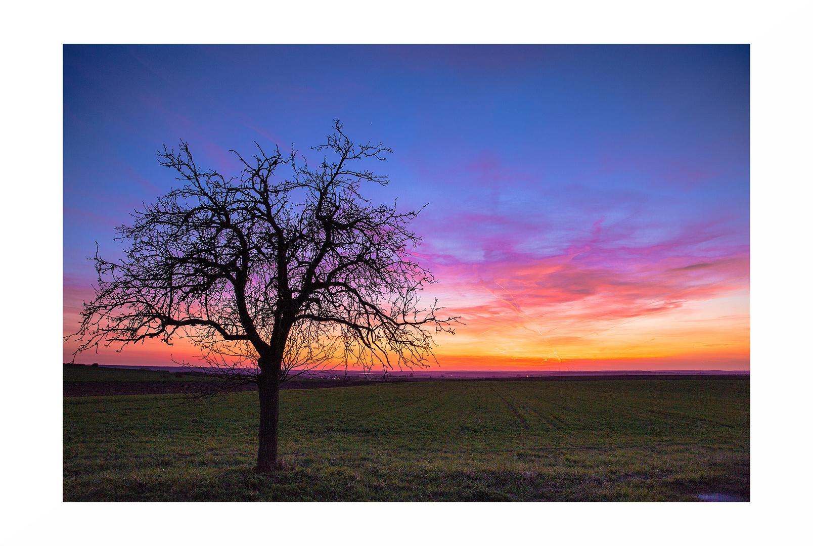 Ein Baum bei Nenzenheim
