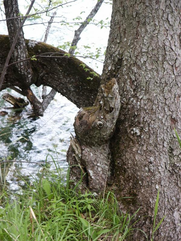 Ein Baum?? Ein Tier??