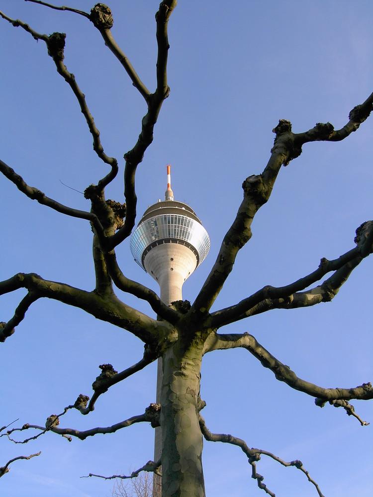 Ein Baum geht auf Sendung