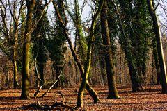 Ein Baum geht seinen Weg!!!!