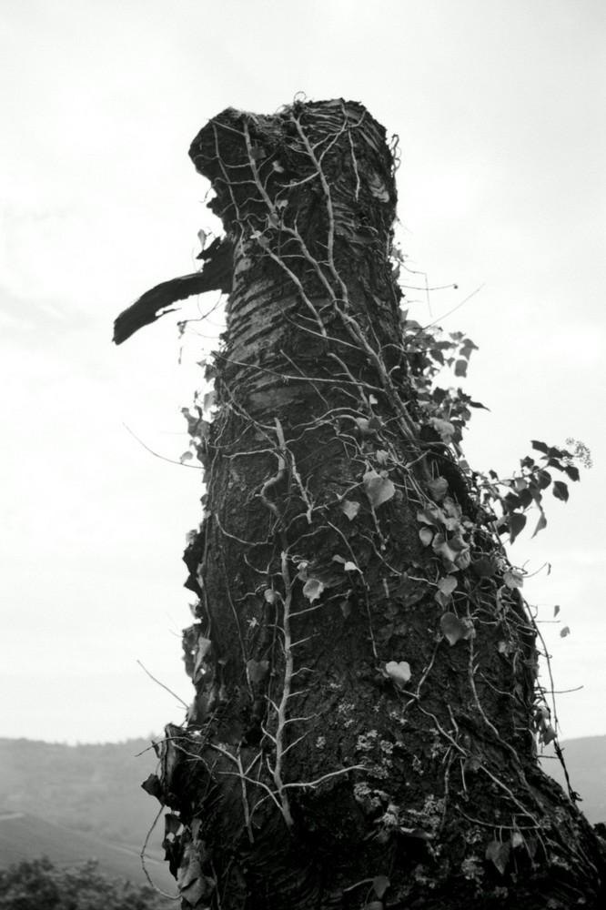 Ein Baum hält Wache