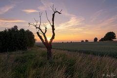 Ein Baum im Abendlicht