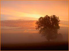Ein Baum im Frühnebel