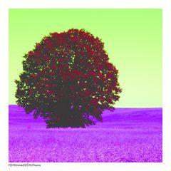 Ein Baum im Kornfeld III