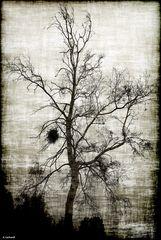 ein Baum im November