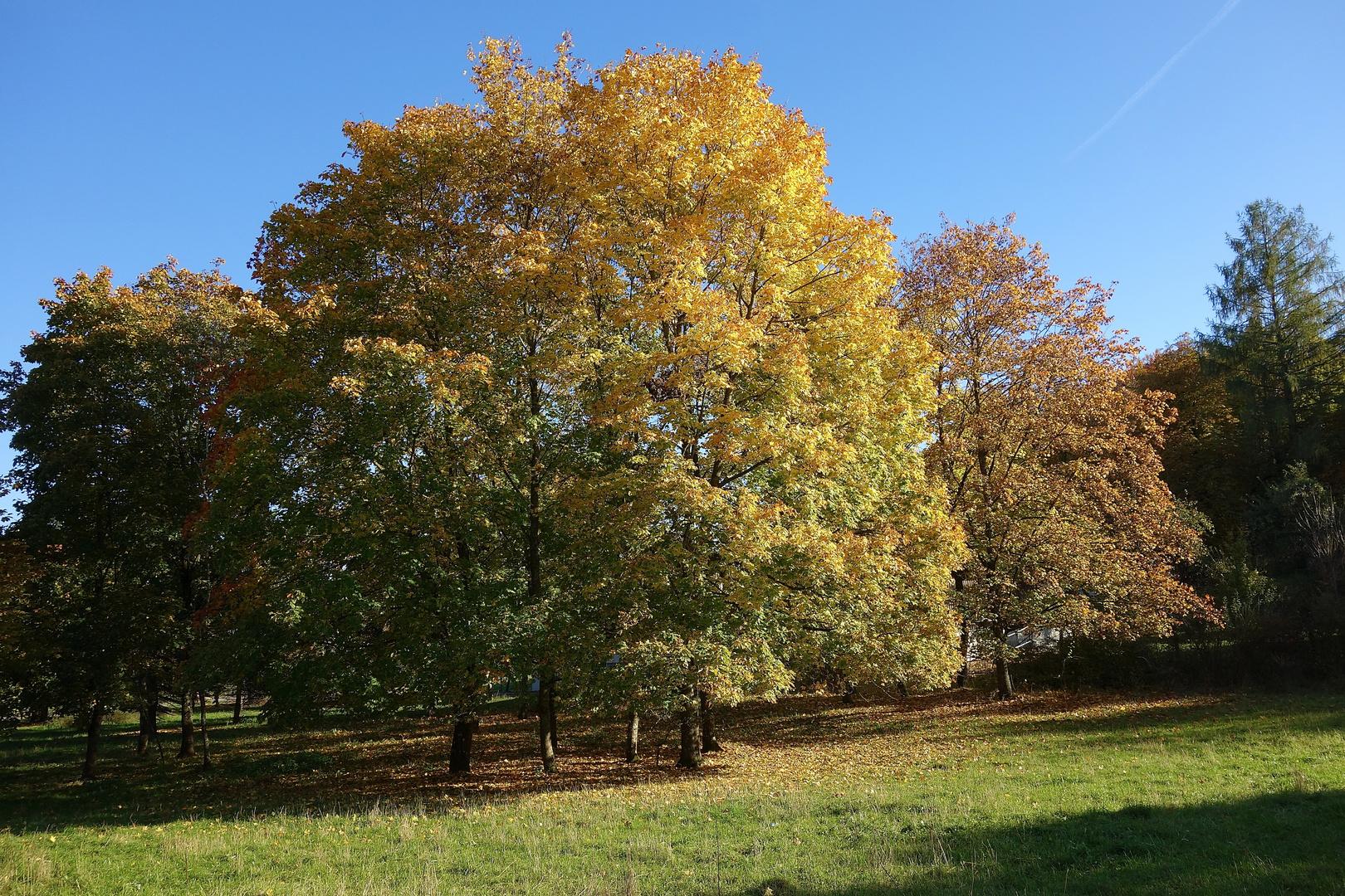 Ein Baum in Herbst