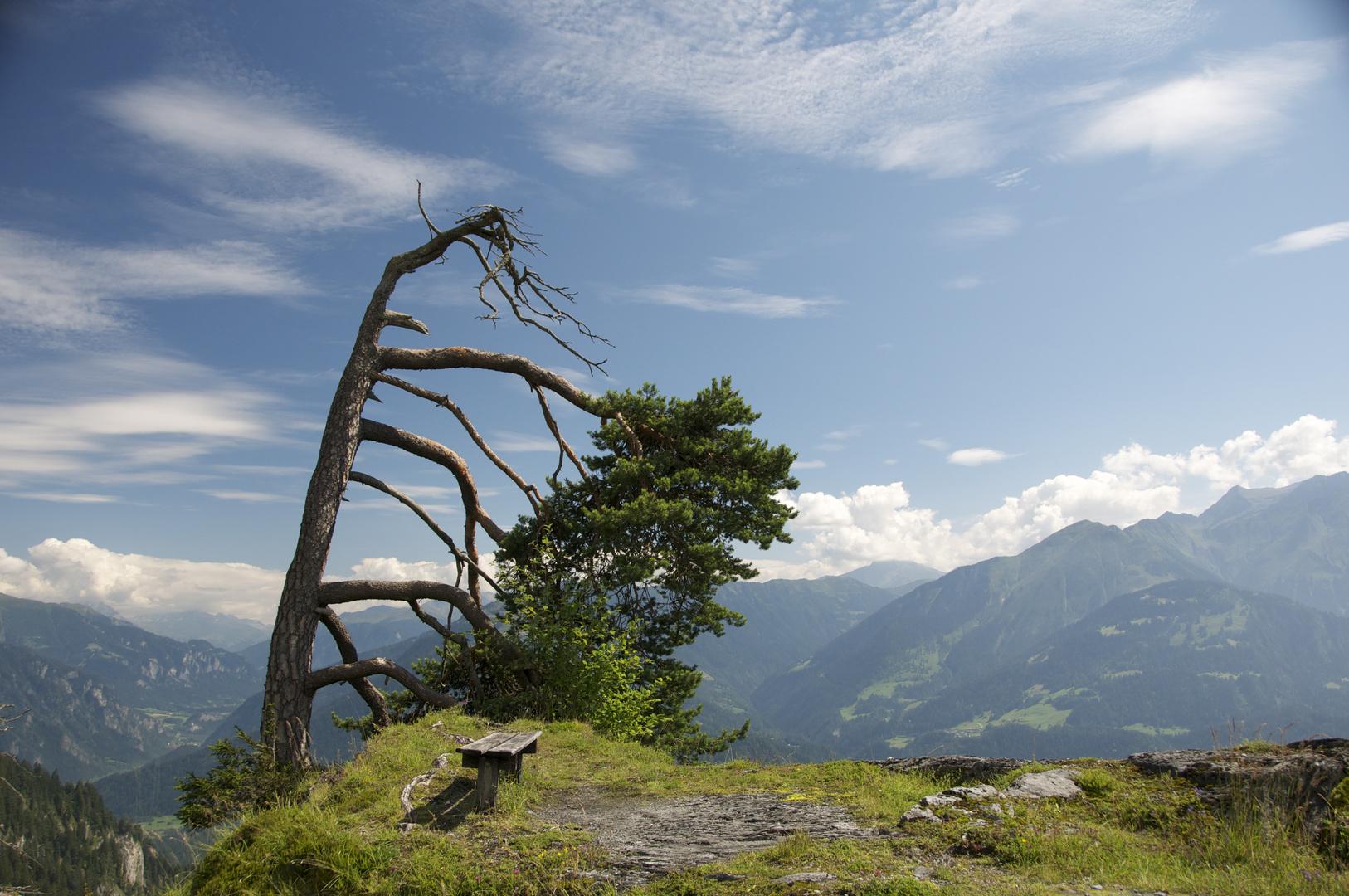 ein Baum mit Aussicht