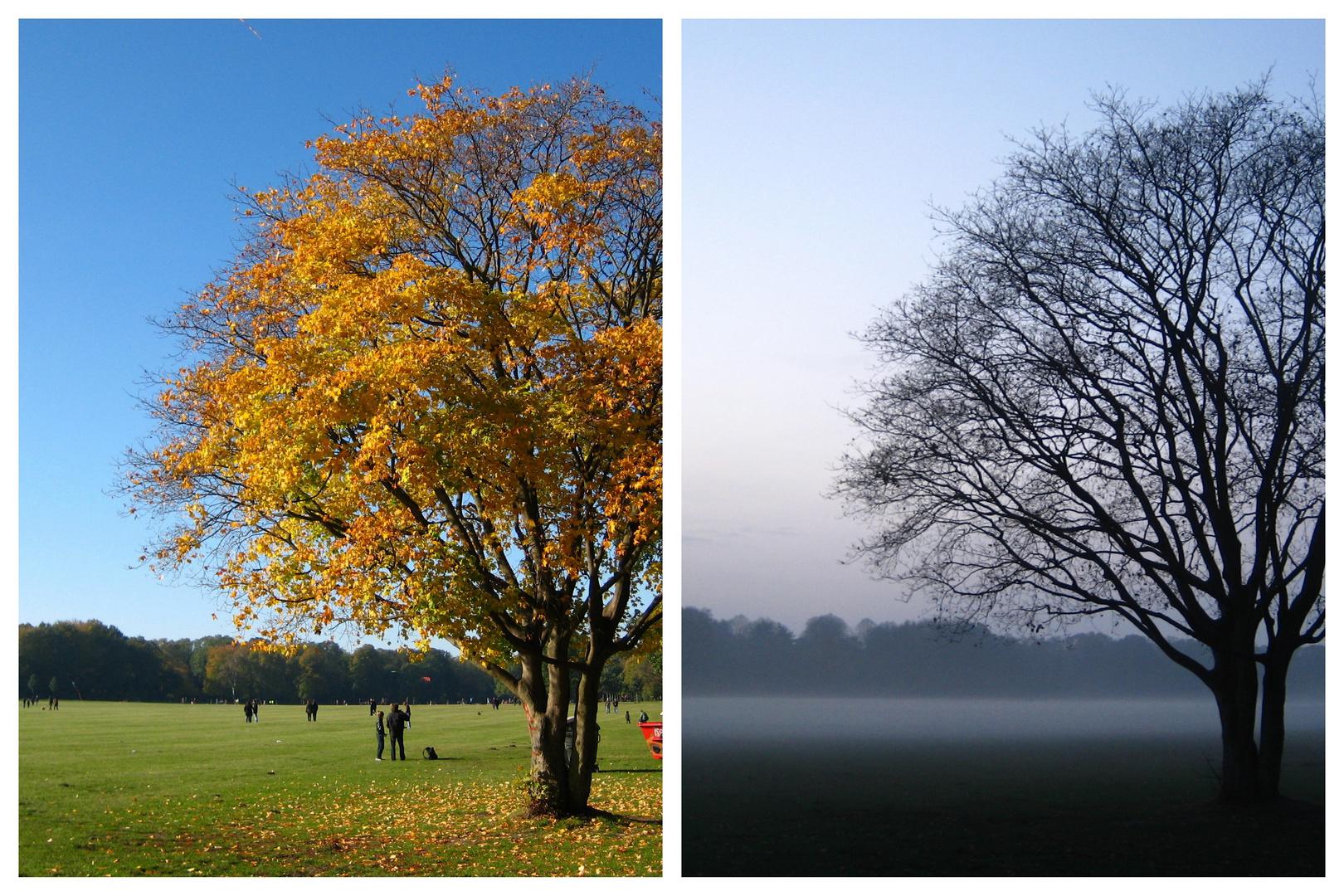 Ein Baum - zwei Stimmungen