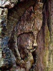 ein Baumgesicht wie ein Gemälde.....