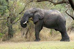 Ein beeindruckender Elefant (1)