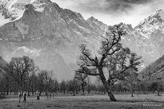 Ein beliebter Fotobaum im großen Ahornboden