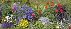Ein besonders bunter Blumengruß für Barbara Ledig zum heutigen Geburtstag