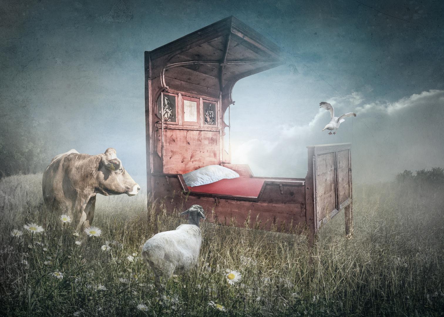 Ein Bett im Kornfeld...