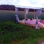 ein Bett im Kornfeld, das ist immer frei .................