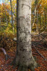 Ein bewegtes Baumleben
