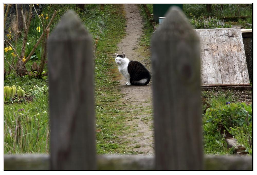ein Bewohner des Bauerngartens nach der Jagd