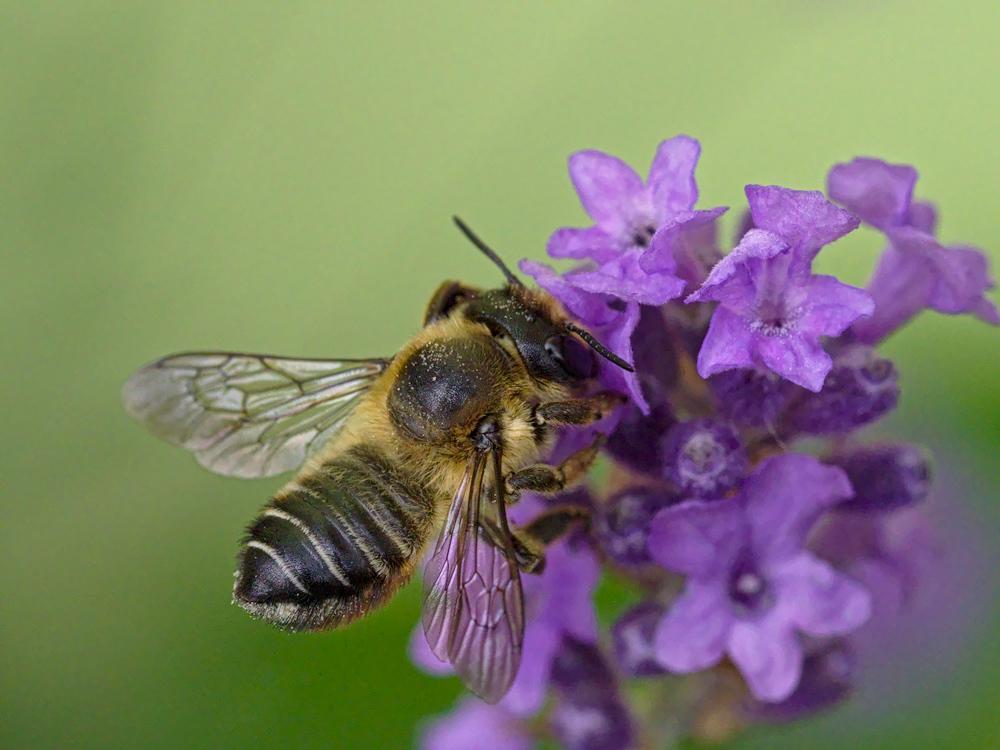ein Bienchen :-))