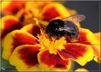 Ein Bienchen ...