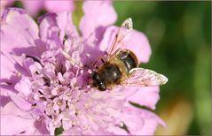 ein Bienchen beim tanken