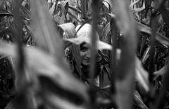 Ein Bild im Corn-Feld