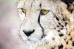 Ein Bild von Gepard.................................#14..2416#16/50