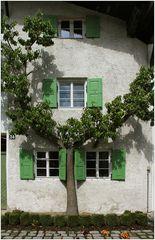 Ein Birnbaum