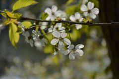 Ein bisschen Frühling...