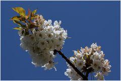 Ein bisschen Frühling... - (Symbolbild)