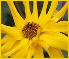 ein bißchen gelbe blume ...