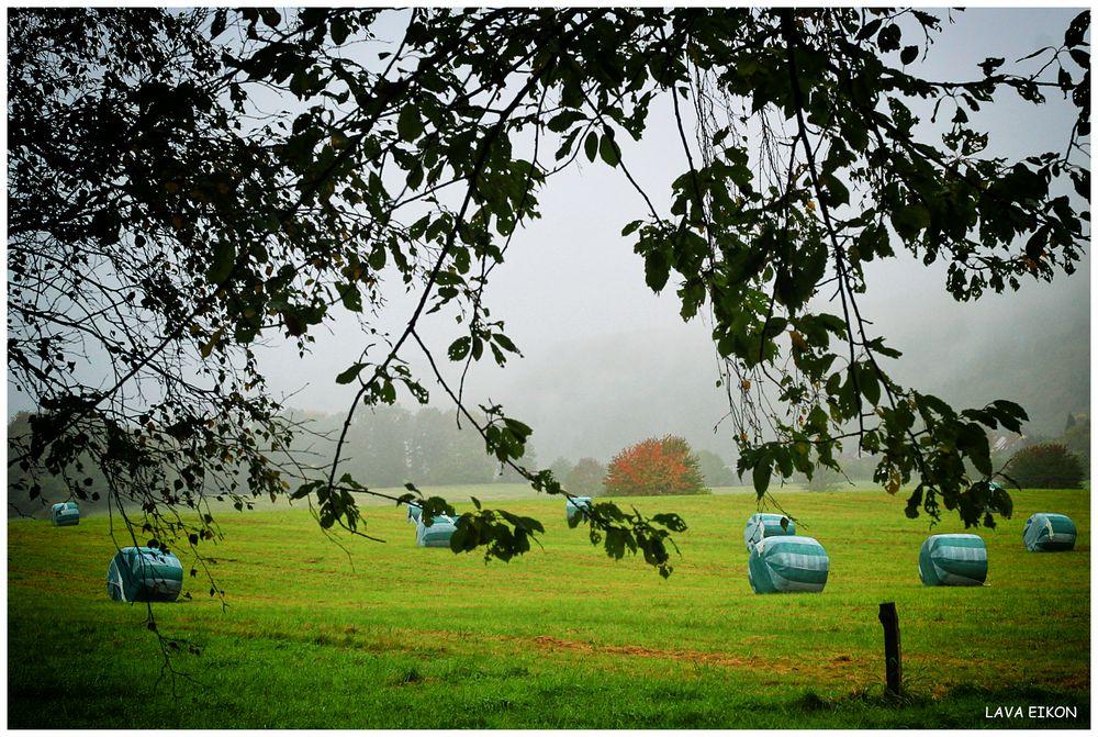 Ein bisschen Herbst auf dem Lande