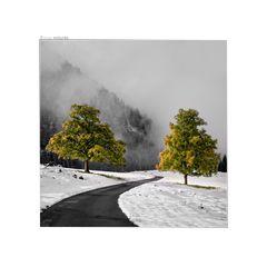 ein bisschen Herbst im Winter