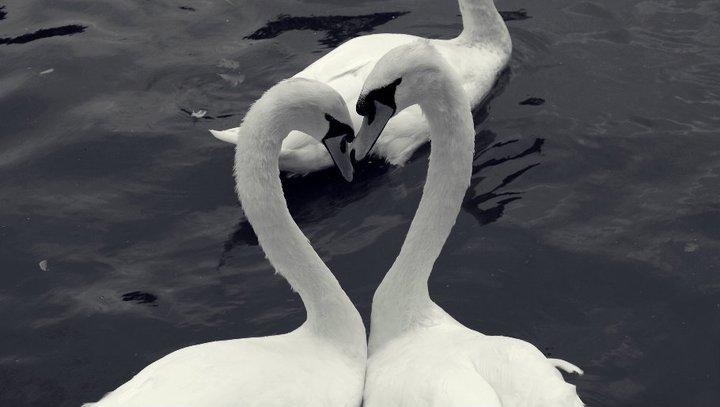 Ein bisschen Liebe.