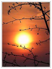 ...ein bißchen Sonne...