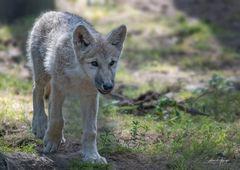 Ein bisschen Wolf