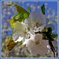 Ein bisserl Frühling