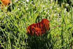 Ein Blatt im Gras