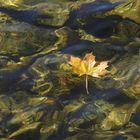 Ein Blatt im See