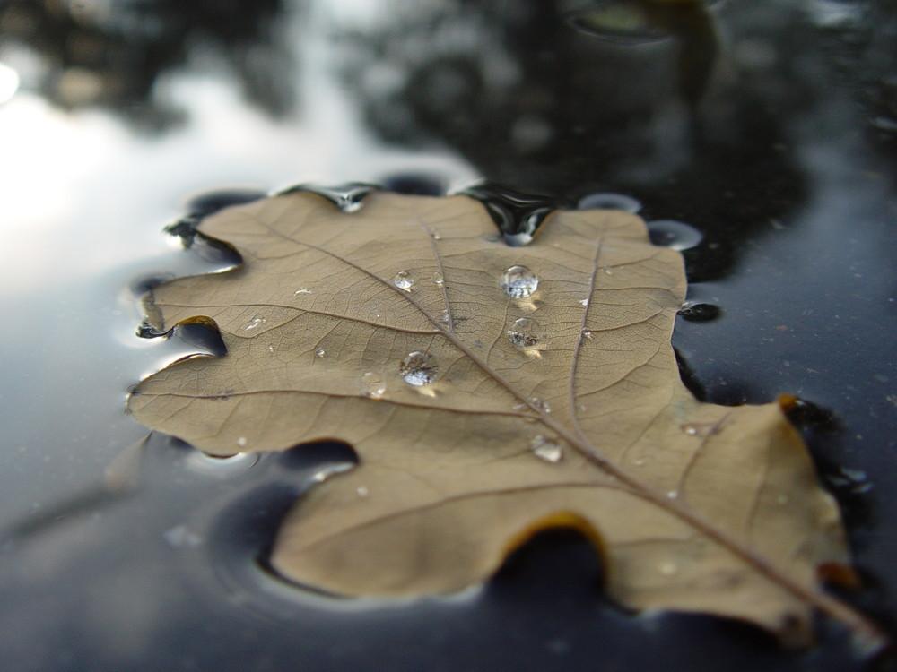 Ein Blatt vom Wasser getragen